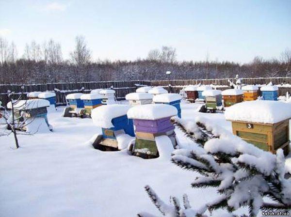 Уход за пчёлами зимой - ЗАБОТЫ ПЧЕЛОВОДА - ПЧЕЛОВОДСТВО - Каталог статей - УСАДЬБА