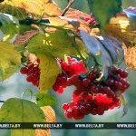 Осень в Беларуси начнется с теплой и сухой погоды