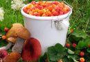 «В Беларуси вводят налог на сбор грибов и ягод»: правда или слухи?