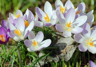 Весна в этом году будет теплее обычного — Рябов