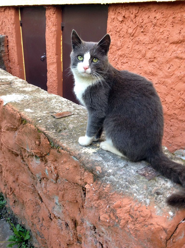 Красавец кот Симон, около  2 лет. Характер спокойный.