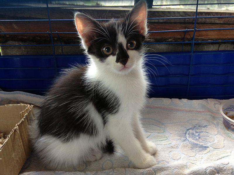 Девочка, совсем малышка,  2 месяца. Мы назвали её Панда. Вы можете выбрать ей другое имя. Чистюля. Весёлая и энергичная.
