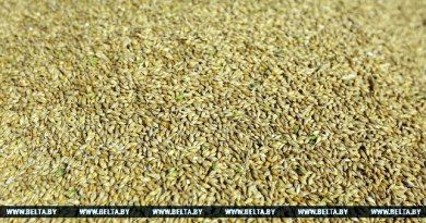 В Беларуси разработано 10 новых сортов зерновых культур