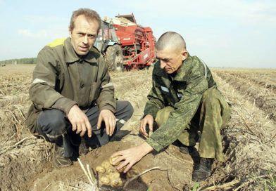 В Рогачёвском районе копают Янку и Уладара