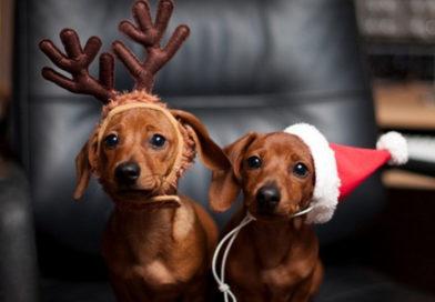 Рогачёвская газета «Свабоднае слова» объявляет фотоконкурс: «Усы, лапы, мокрый нос – лучший новогодний пёс»