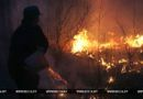 В лесах Беларуси в выходные произошло 88 пожаров