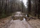 Малые Коноплицы – Тесновое: пять километров безжизненных дорог