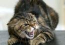 В Рогачёвском районе в Старом Довске бешеный кот укусил мужчину