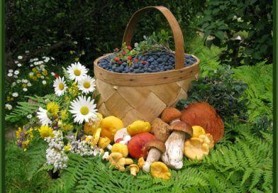 На Рогачёвщине начался грибной и ягодный сезон. Как не заработать штраф и не заплутать в лесу?