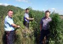 В рамках спецпрограммы «Мак» рогачёвские оперативники уничтожили  плантации конопли