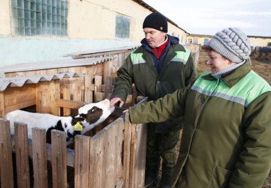 Сельхозкомбинат «Дедлово» — одно из передовых хозяйств  Рогачёвского района